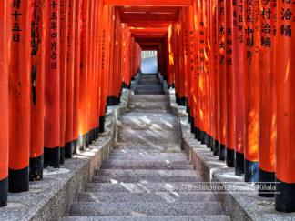 Torii sanctuaire de Hie
